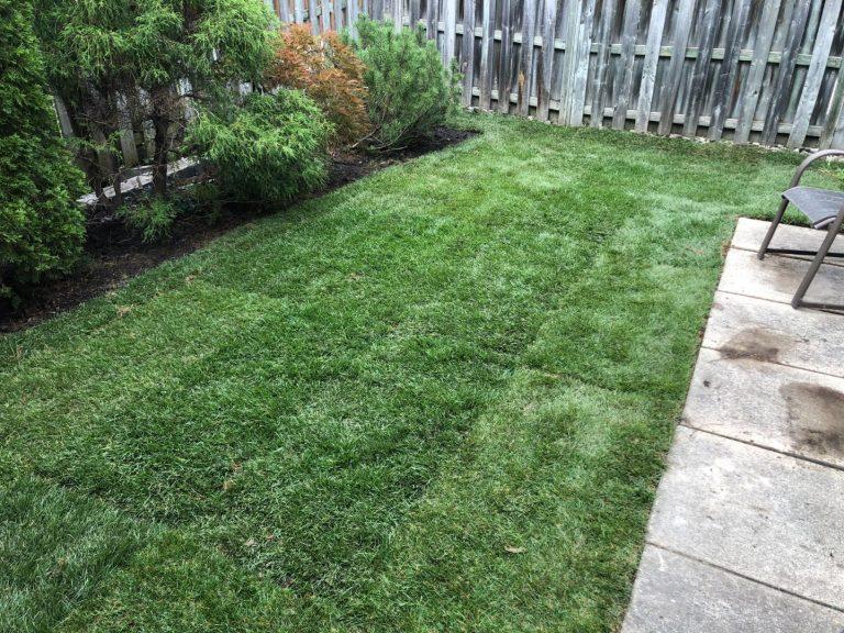 Lawn Mowing Toronto