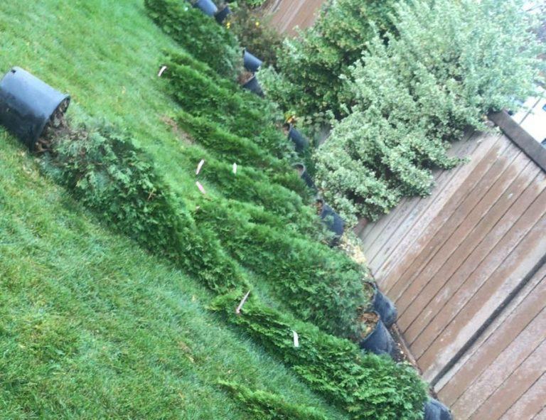 Toronto Tree Planting