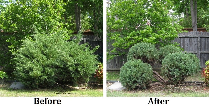 Before and After of Hedge Trimming Services