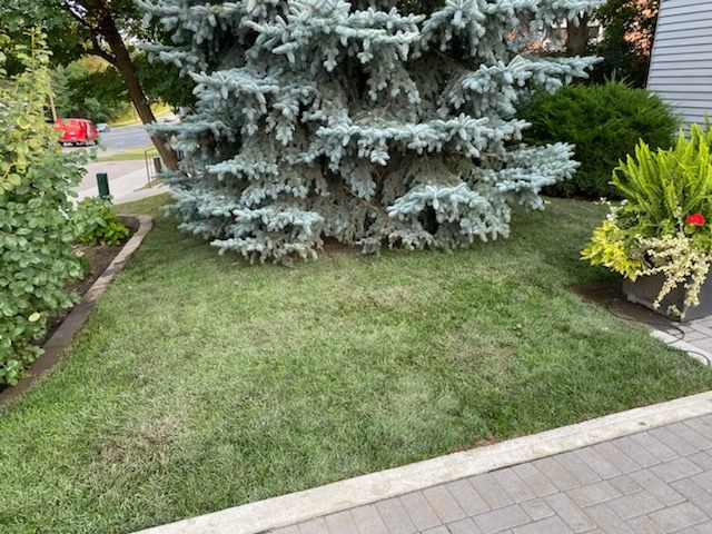 Affordable Lawn Care Services Toronto