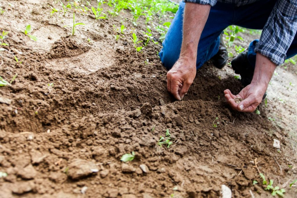 Organic Fertilization Service